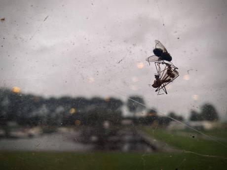Honderd euro per nacht voor een beschimmelde caravan vol doodgemepte vliegen