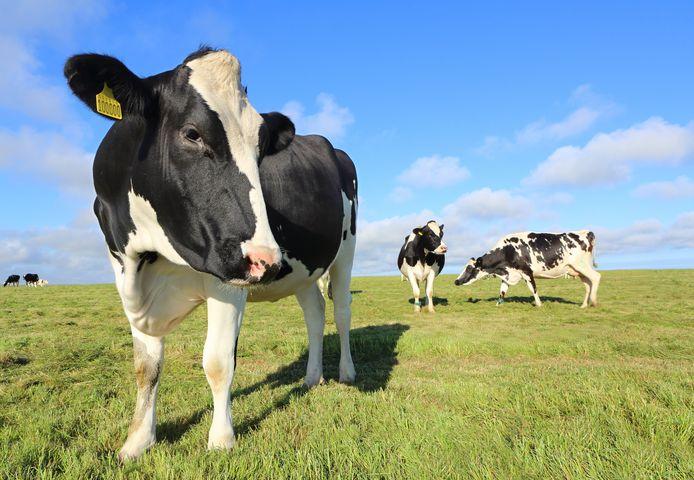 Zondag kan je het boerderijleven opsnuiven in Diksmuide