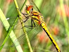 Jeugd IVN speurt naar insecten op de Strabrechtse Heide