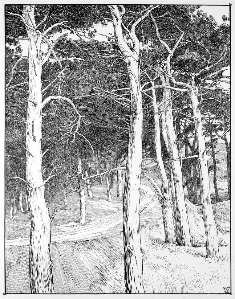 Zandweg door een bos van grove dennen. Beeld L.W.R. Wenckebach