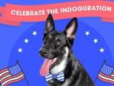 Bidens hond Major krijgt eigen 'indoguration'