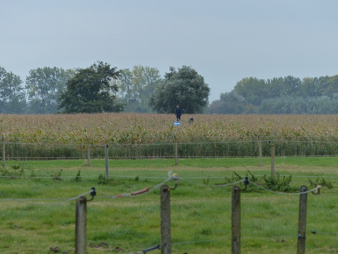 De politie zocht in het maisveld naar de jongen.