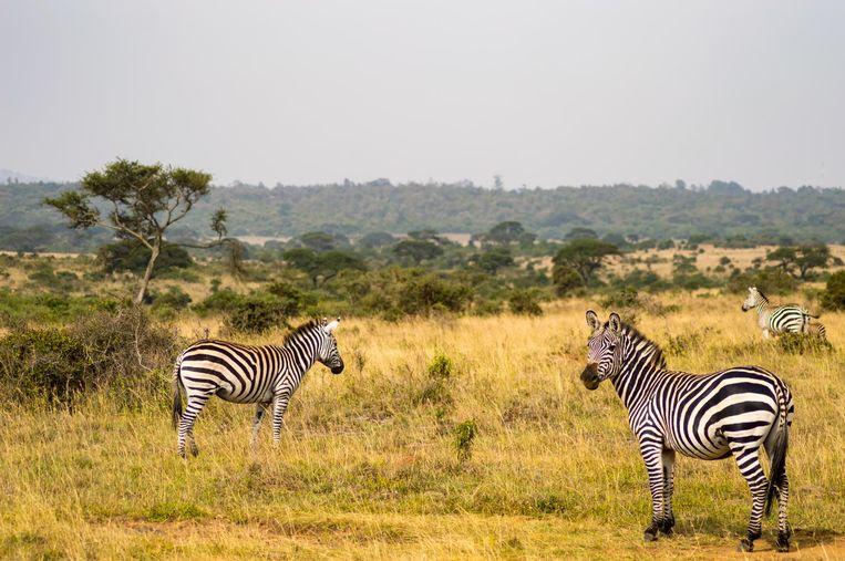De Afrikaanse wildernis van Kenia was een van de grote liefdes van schrijver Karen Blixen. Beeld