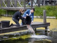 Op deze Zeeuwse camping verjagen ze hinderlijke muggen op een bijzondere manier
