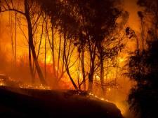Vuurzee op Cyprus is grootste brand in bijna halve eeuw: mogelijke aanstichter opgepakt