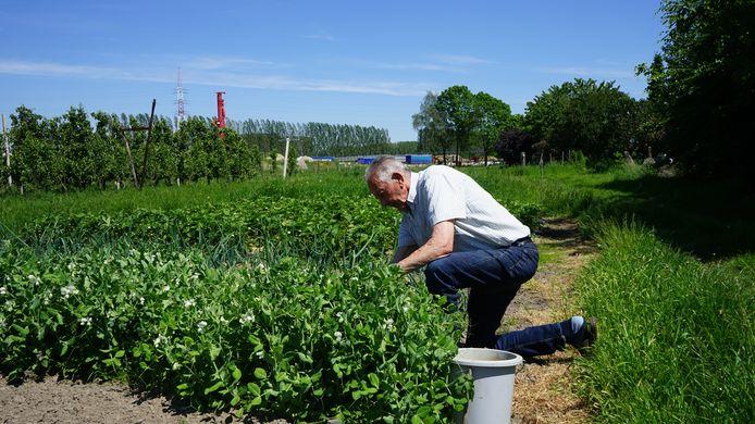 Bewoner Lucien Vinck aan het werk in zijn moestuin. De gemeente wil zo snel mogelijk weten of de groenten veilig zijn voor consumptie.