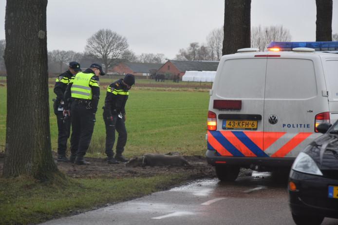 Wernhout - Agenten bekijken één van de op 15 januari in Wernhout door hun eigenaresse doodgeschoten honden.