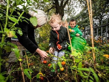 Westlandse scholen zweren bij schooltuintjes: 'Kinderen worden er een stuk wijzer door'