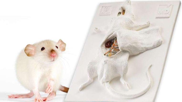 Studenten kunnen hun operatietechniek oefenen op een muis van kunststof. Beeld