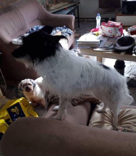 Echtpaar belandt met corona in ziekenhuis, hondjes blijven in smerig huis achter