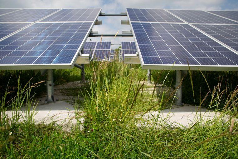 Ubbena, ten noorden van Assen, heeft het eerste ecologische zonnepark van Nederland. Beeld Herman Engbers