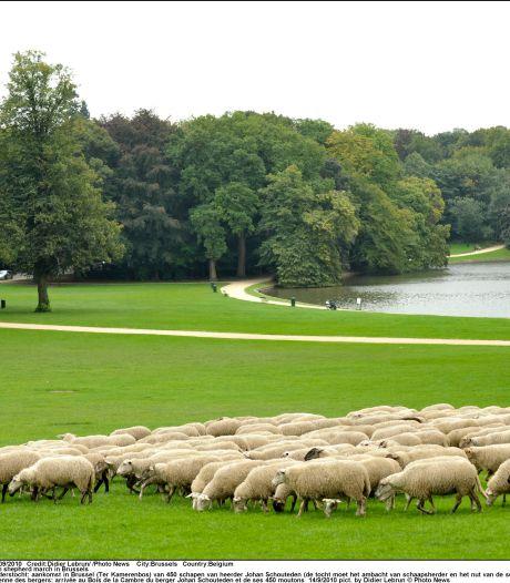 La Russie interdit l'importation de chèvres et de moutons belges