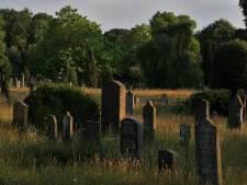 Vooralsnog geen natuurbegraafplaats in Zwolle: 'Maar natuurbegraven is niet buiten beeld'
