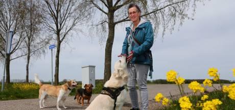 Geen geld voor dierenarts, voer of crematie? Wilma's stichting helpt