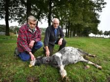Vriendengroep vergoedt kosten na dood pony in Tilligte: 'We kunnen mekaar weer in de ogen kijken'
