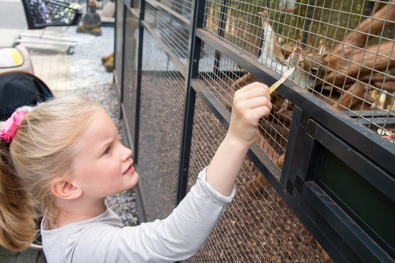 De 6-jarige Leonie uit Utrecht zijn in de buurt op vakantie en bezoekt met haar familie de eekhoorn experience. Ze krijgt veel aandacht van deze Hudson eekhoorn.