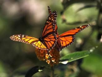 Bij en vlinder dreigen uit te sterven