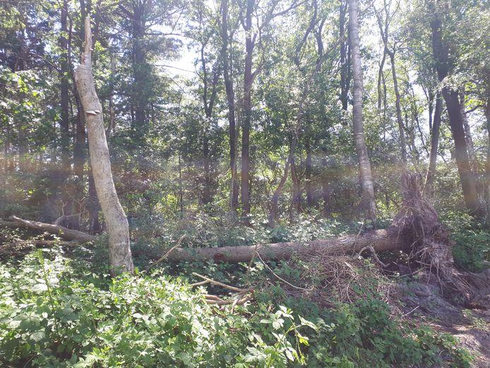 De rand van het Keltenbosje lijkt met zwaar materieel te zijn aangepakt. Sommige bomen zijn omgeduwd, anderen afgebroken. Drie ingangen naar de dassenburcht zijn verdwenen.
