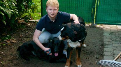 """Twee honden van gezin vergiftigd in één maand tijd: """"De dader moet gestopt worden"""""""