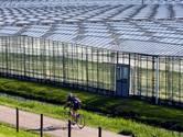 Tuinbouwsector slijpt de messen voor gesprekken met minister over verhoging van belasting op elektriciteit