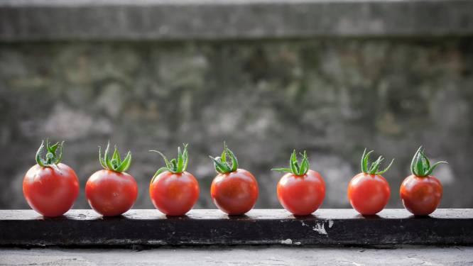 Nieuwe trend: mini-groenten telen in je woonkamer