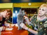 Kattenkeuring in Olst is vooral gezellig: 'Maar een gehandicapte kat komt niet door de keuring'