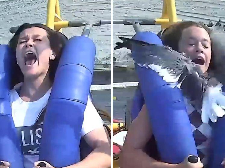 Meisje krijgt meeuw vol in het gezicht tijdens ritje in pretparkattractie