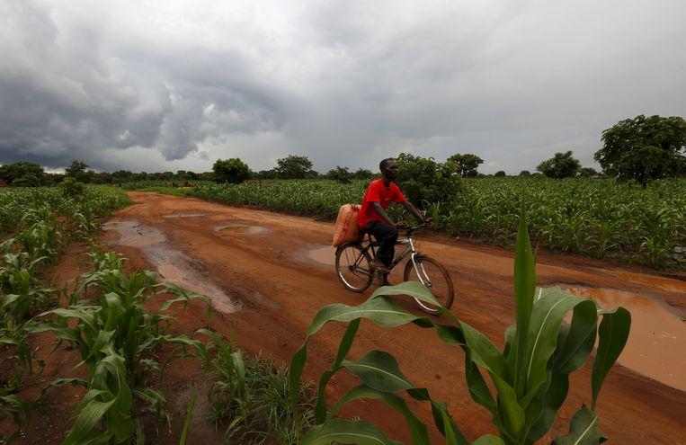 Maïsteelt in Malawi. Beeld Reuters