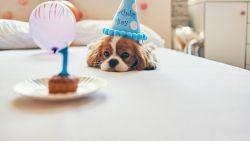 Wetenschap ontwikkelt formule om de échte leeftijd van je hond te berekenen