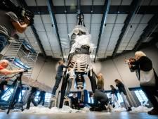 Reusachtig kunstwerk van Arnhemse Florentijn Hofman geïnstalleerd in NEMO