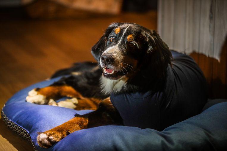 Brugge eigenaars hond, Petra Bauwens en Philip Van Dingenen op zoek naar mevrouw die bij hond bleef toen die werd aangereden