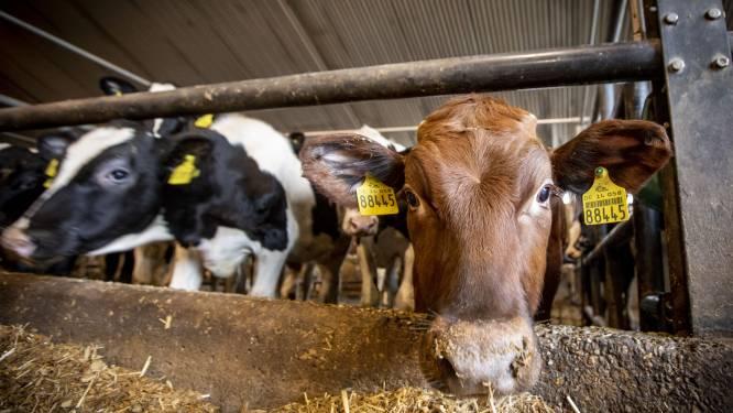 Boze boeren krijgen 'koeientaks' voor hun kiezen