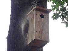 Gemeente Hengelo wijst buurtbon voor nestkastjes in Driene af