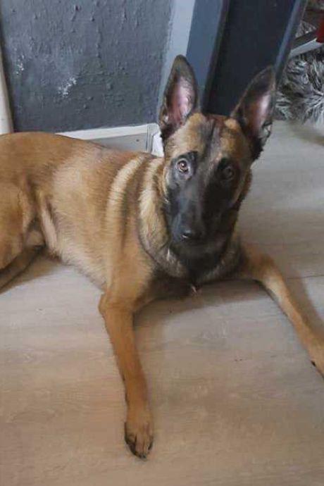 Vermiste 'probleemhond' Wodan gevonden dankzij oplettende boer in Lemele: 'Hij was ver van huis'