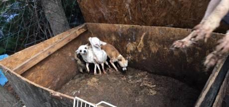 Malafide hondenfokkers hebben vrij spel: 'Veel foute types'