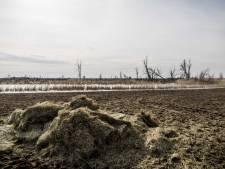GroenLinks Flevoland kritisch op bijvoerbesluit grote grazers