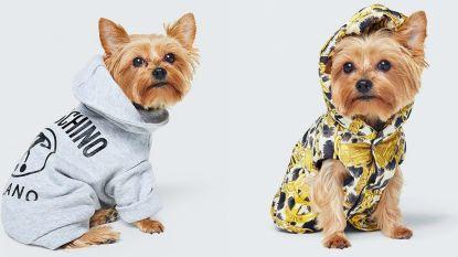 Moschino lanceert ook kledinglijn voor dieren samen met H&M