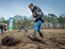 Brabantse natuurorganisaties delen 57.000 gratis bomen uit