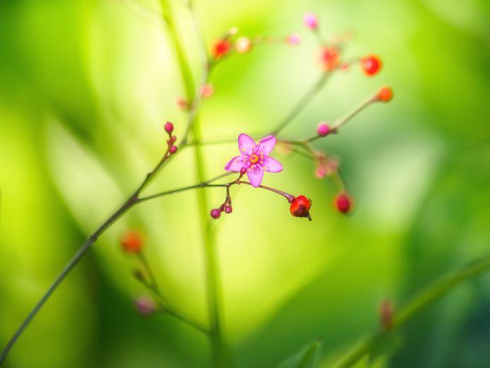 De eerste bloemen.