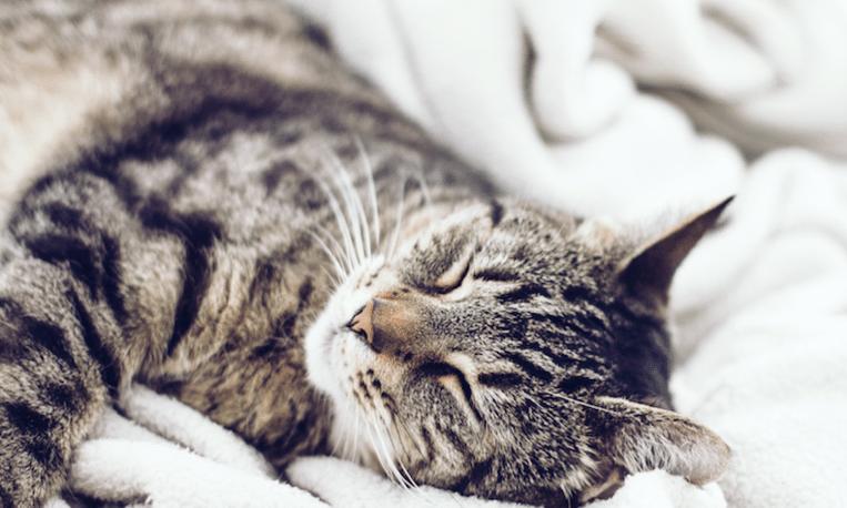 'De oudste kat van de wereld woont in Dordrecht'