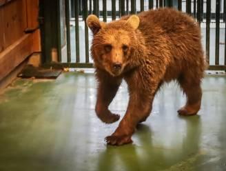 Russische weesberin Byara arriveert na tocht van 3.000 kilometer in Natuurhulpcentrum
