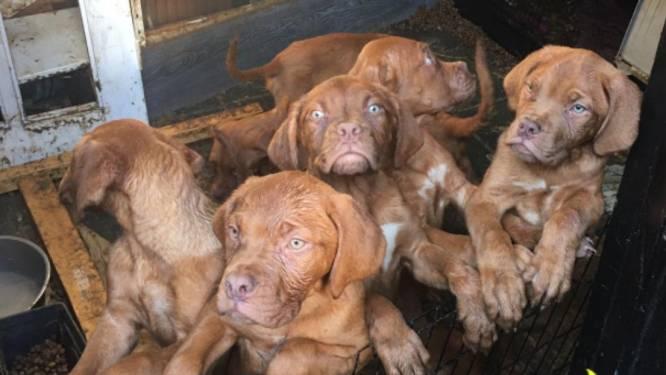 Acht verwaarloosde puppy's uit berging gehaald