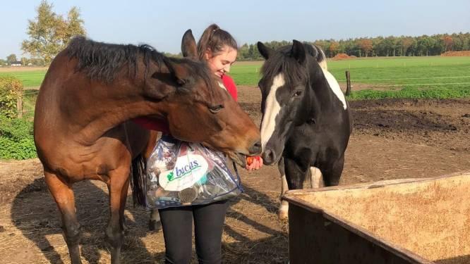 Paardeneigenaren rouwen na fatale blikseminslag in Maarheeze: 'Een minuut later en ze waren alle 26 dood geweest'