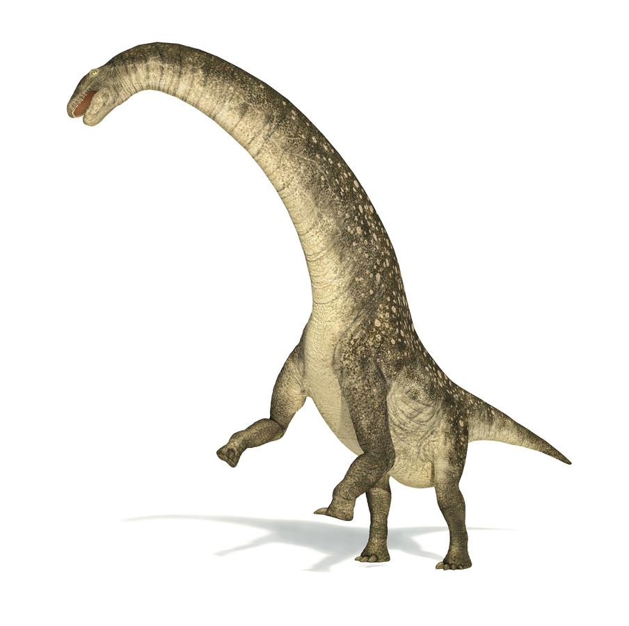 Een impressie van hoe de titanosaurus er heeft uitgezien.