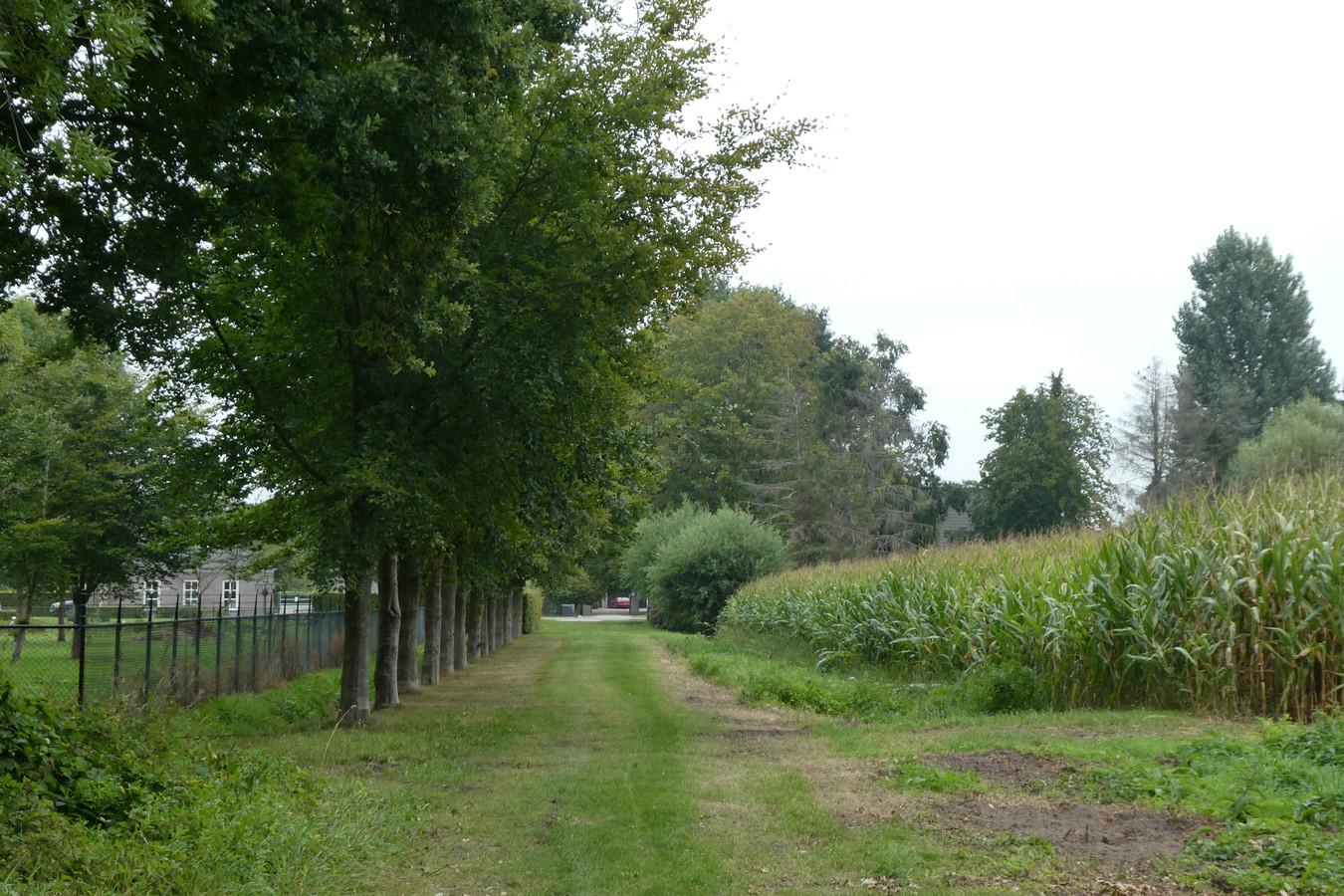De beuken naast het maïsveld waren plots verdwenen.