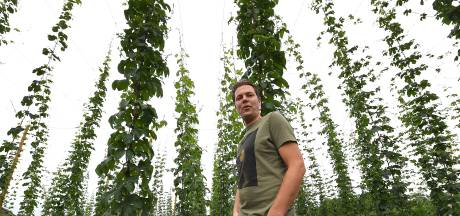 Hoppa! De hop groeit metershoog in Wilbertoord