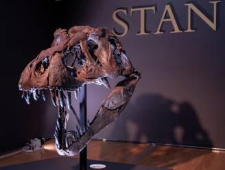 Nog angstaanjagender dan gedacht: T. rex had 'detectoren' in zijn kaken waardoor prooien makkelijk te vinden waren