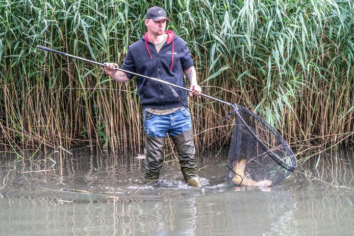 Een reddingsactie in de Wavin-vijver in Holtenbroek kon niet voorkomen dat bijna alle grote vissen die eens in de vijver zwommen, nu dood zijn.