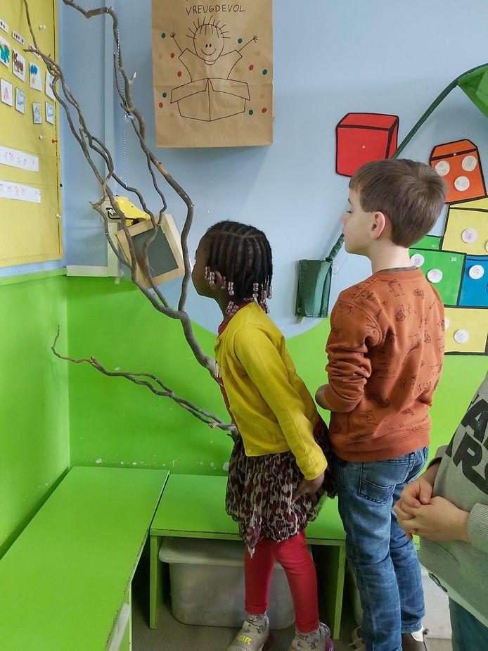 De kleuters bewonderen de digitale kanarierobot (linksboven) LittleLilly in SG Pit. in Beringen.