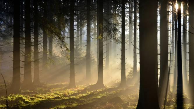 Natuurpunt organiseert avondwandeling door Vagevuurbossen